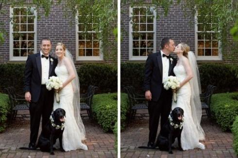 Perros y bodas ideas