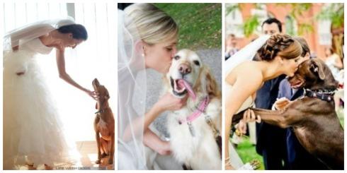 novias y perros Collage