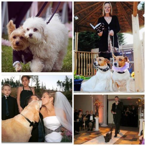 Perros & bodas Collage