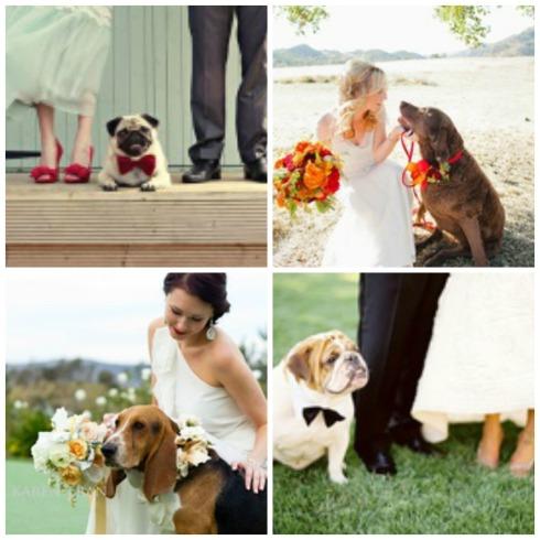 Perros en las bodas, si se puede Collage