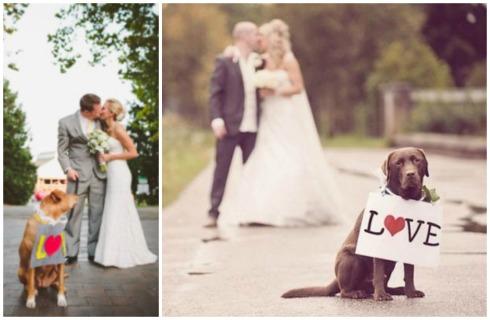 Perros con carteles para bodas Collage