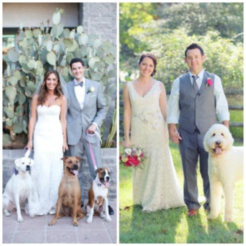 Sesión de retratos con perros en bodas Collage