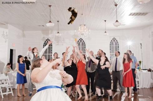 gatos voladores en vez de tirar el ramo de novia2