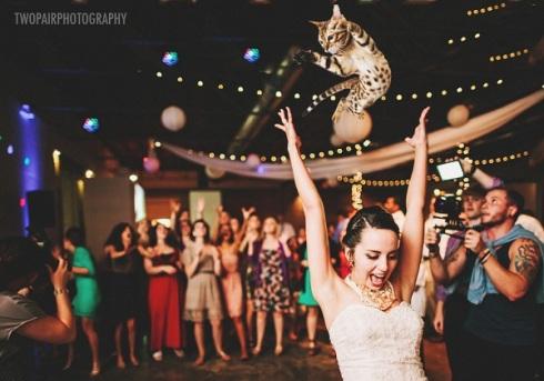 gatos voladores en vez de tirar el ramo de novia7