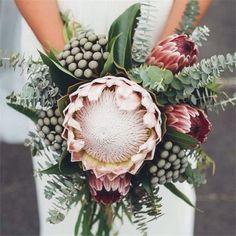 proteas ramos